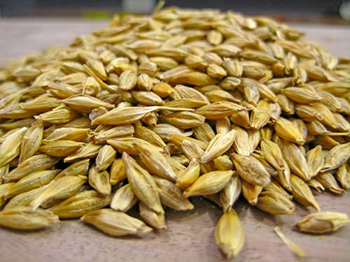 Barley Benefits for Beauty In Hindi