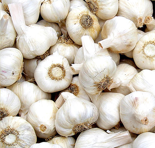 Garlic Benefits For Beauty In Hindi