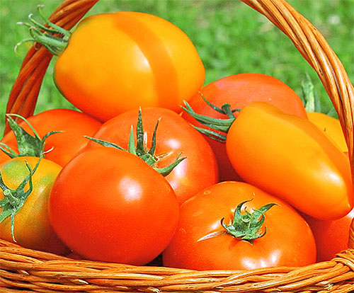 Tomato Benefits For Health In Hindi