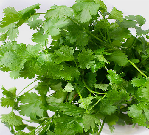 Coriander Benefits For Health In Hindi
